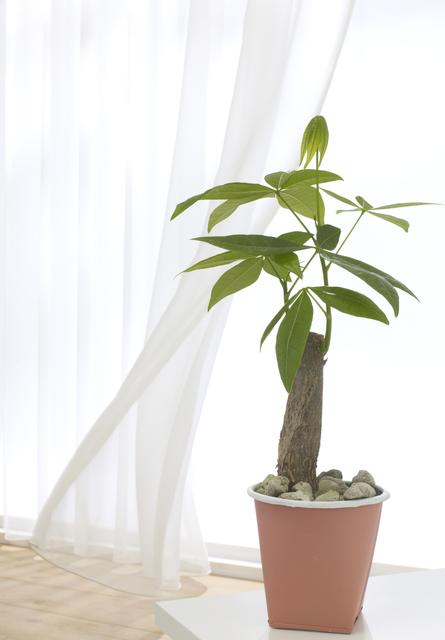 引き出し窓の付近に置かれた観葉植物