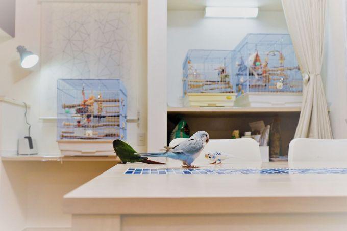 小鳥たちのために設計した棚/注文住宅実例