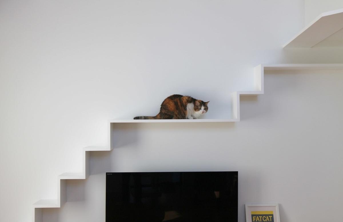 キャットウォークで休む猫