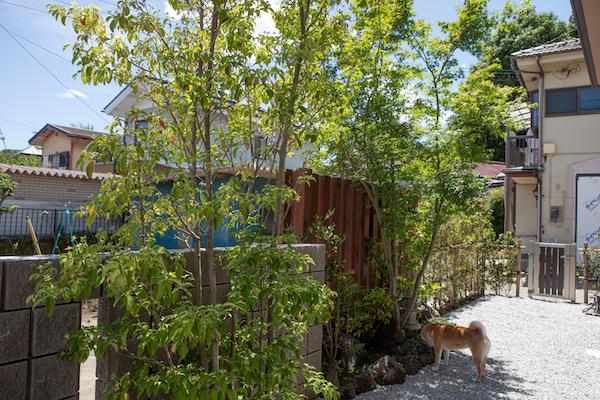 モミジの木の植栽/注文住宅実例