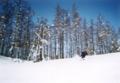 [スキー]多分鷲ヶ岳