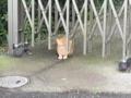 [動物]金甲山のにゃんこ