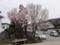 桜@ウエノスキーの駐車場