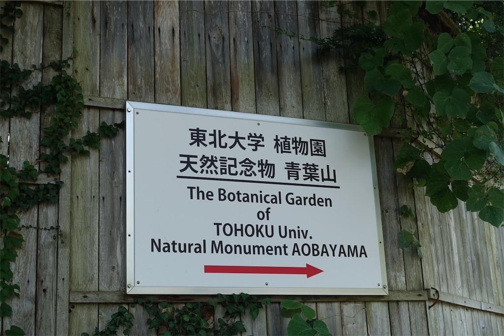 f:id:SagamiSaganaka:20190824231344j:image