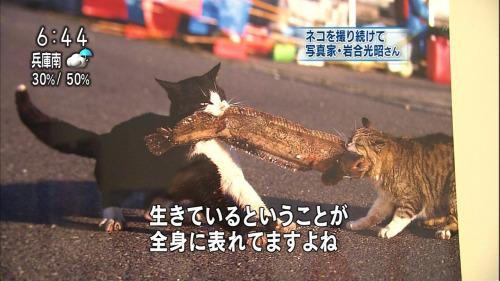 f:id:Saitoh:20170129231354j:plain