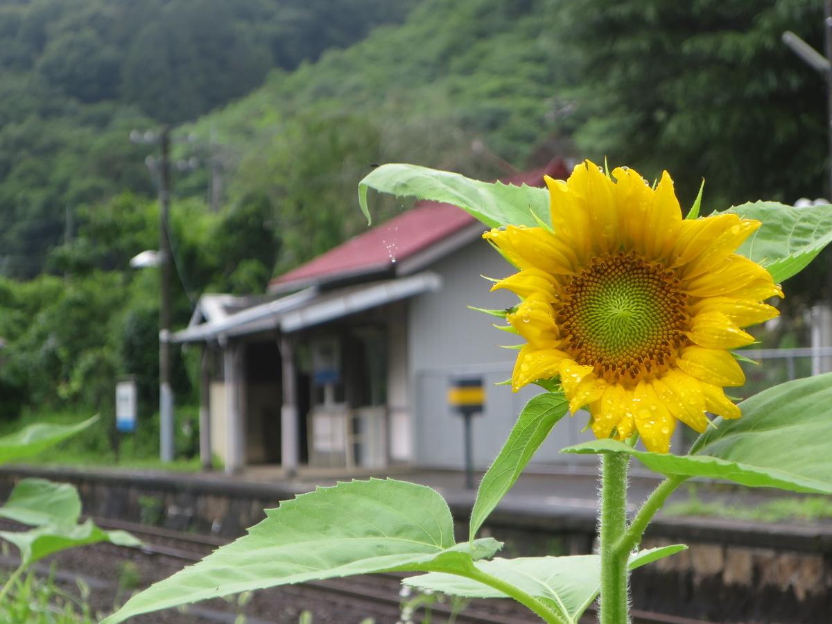 f:id:Sakasegawa3019:20200804060525j:plain