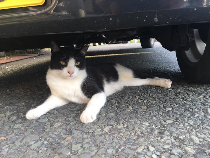伊豆大島の猫