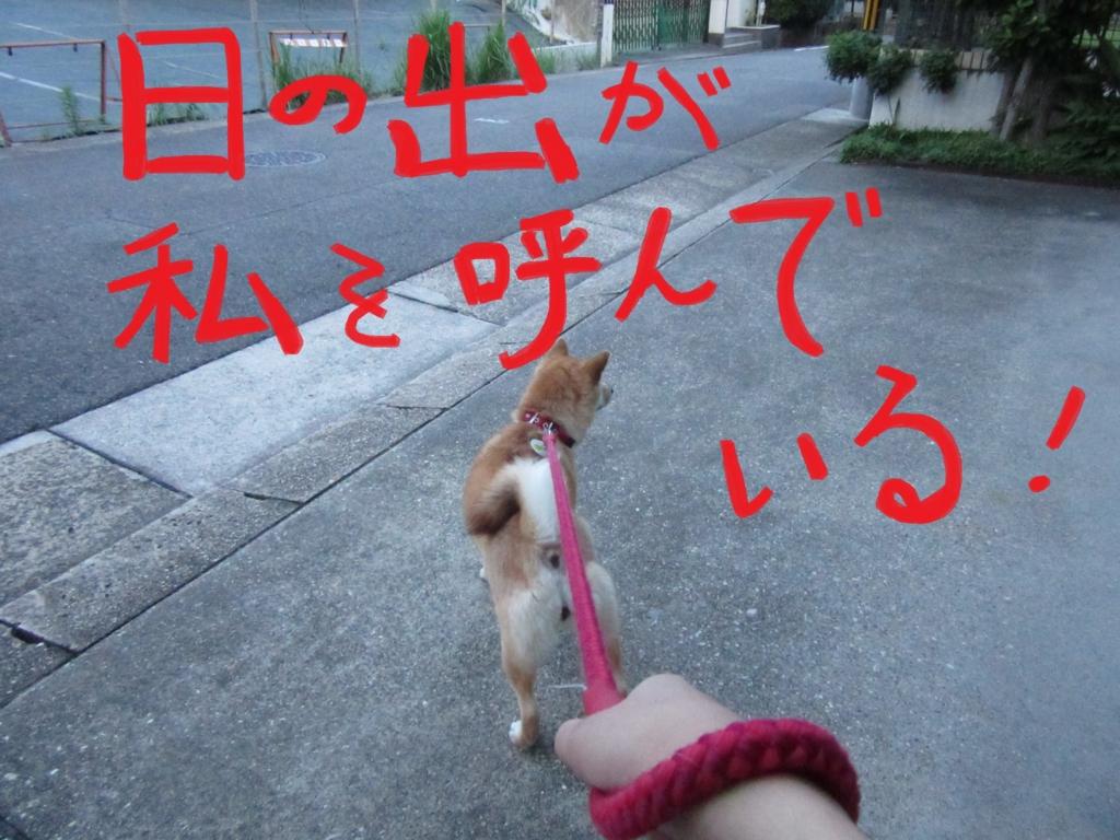 f:id:Sakurachannel0530:20160703195049j:plain