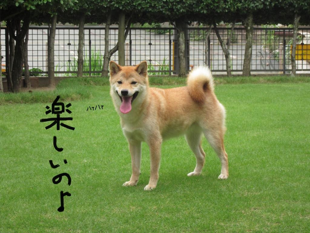 f:id:Sakurachannel0530:20160708202315j:plain