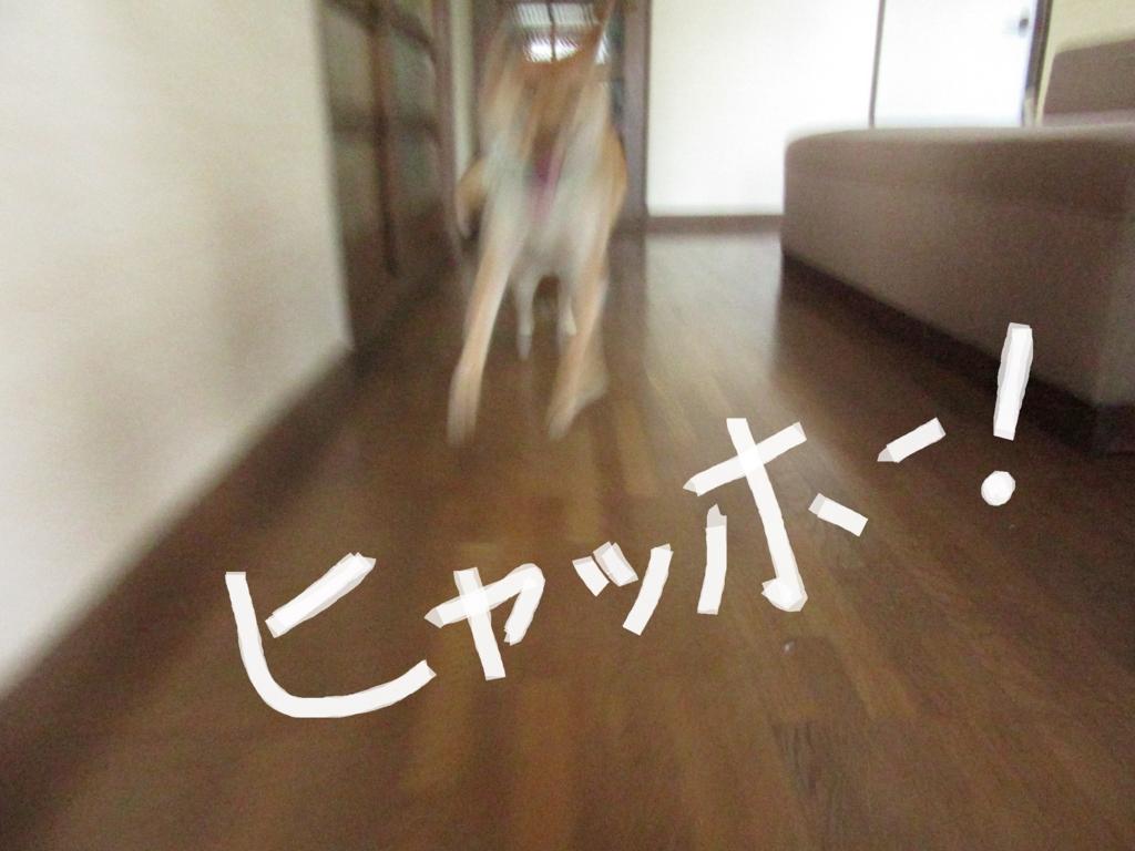 f:id:Sakurachannel0530:20160709125142j:plain