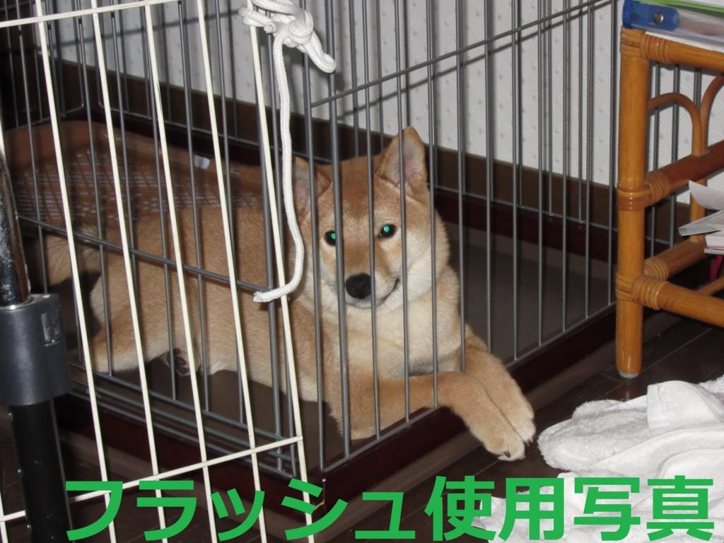 f:id:Sakurachannel0530:20160710210748j:plain