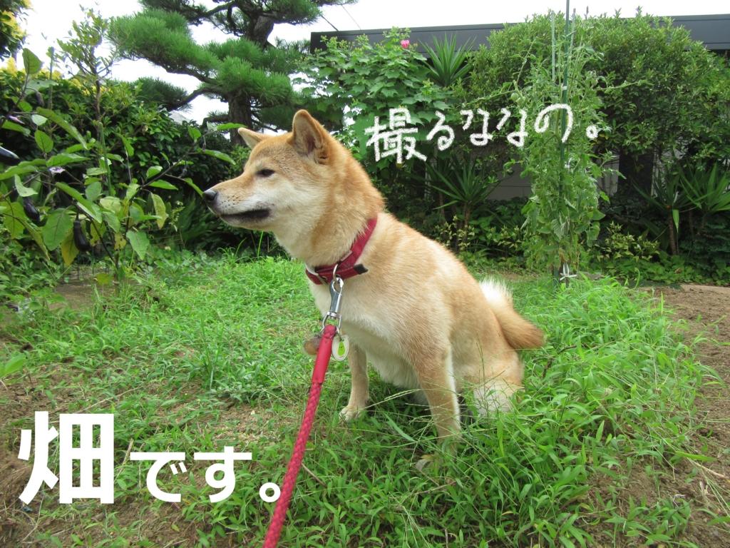 f:id:Sakurachannel0530:20160717200329j:plain