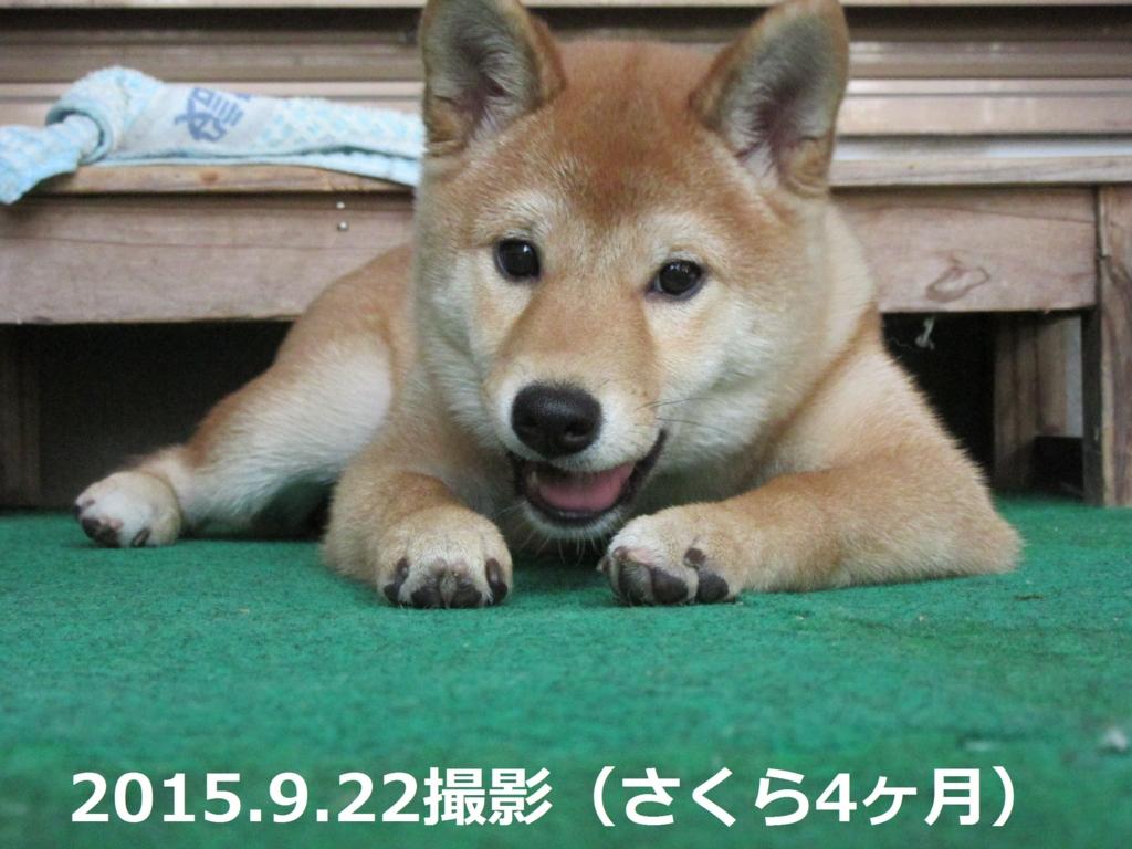 f:id:Sakurachannel0530:20160817203614j:plain