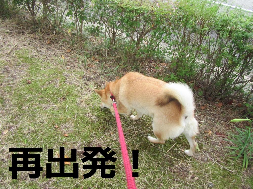 f:id:Sakurachannel0530:20160821214408j:plain