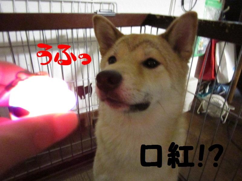 f:id:Sakurachannel0530:20160830211305j:plain