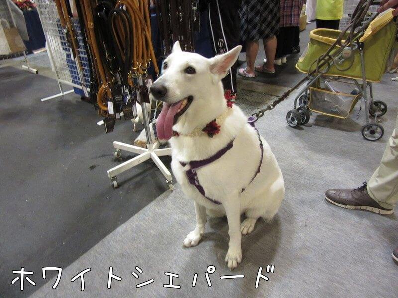 f:id:Sakurachannel0530:20161011233356j:plain