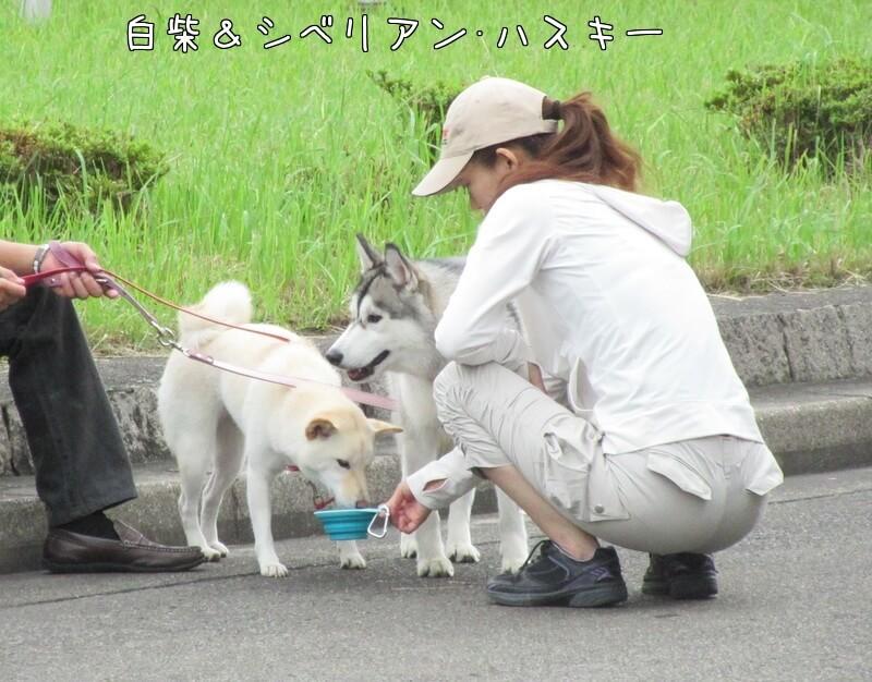 f:id:Sakurachannel0530:20161011233419j:plain