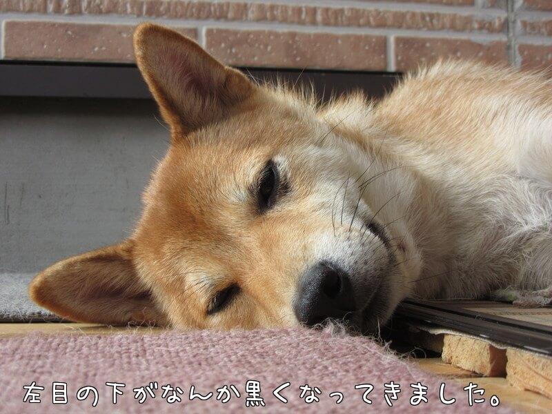 f:id:Sakurachannel0530:20161026171738j:plain