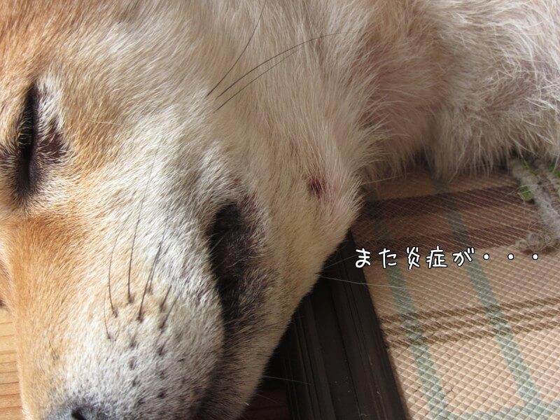 f:id:Sakurachannel0530:20161026171801j:plain
