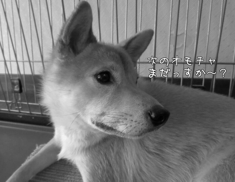 f:id:Sakurachannel0530:20161114224447j:plain