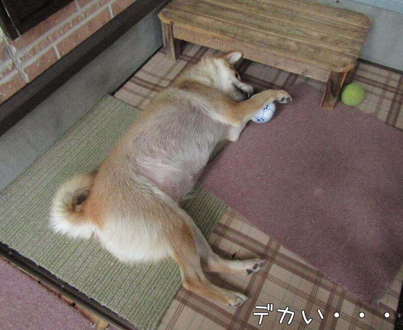 f:id:Sakurachannel0530:20161114224458j:plain