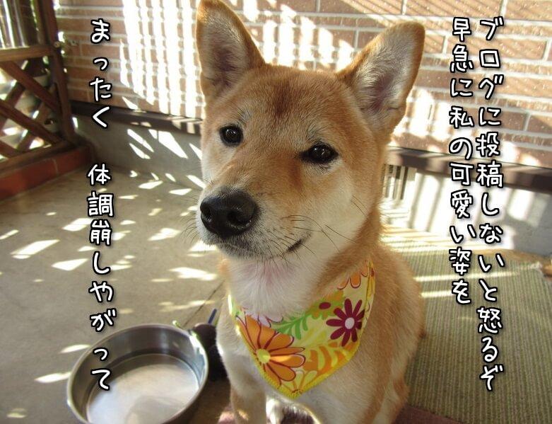 f:id:Sakurachannel0530:20161121214607j:plain