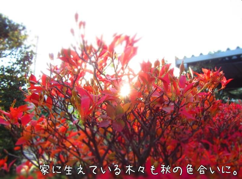 f:id:Sakurachannel0530:20161208190325j:plain