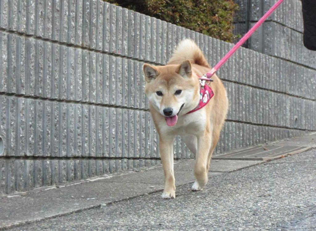 f:id:Sakurachannel0530:20170106210413j:plain