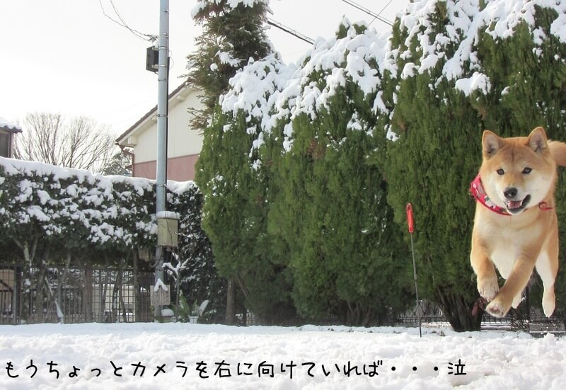 f:id:Sakurachannel0530:20170115213803j:plain