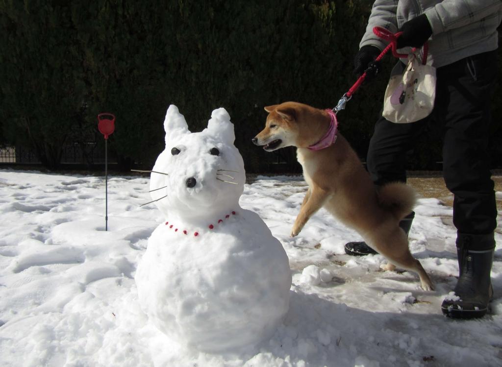 柴犬型の雪だるまと柴犬