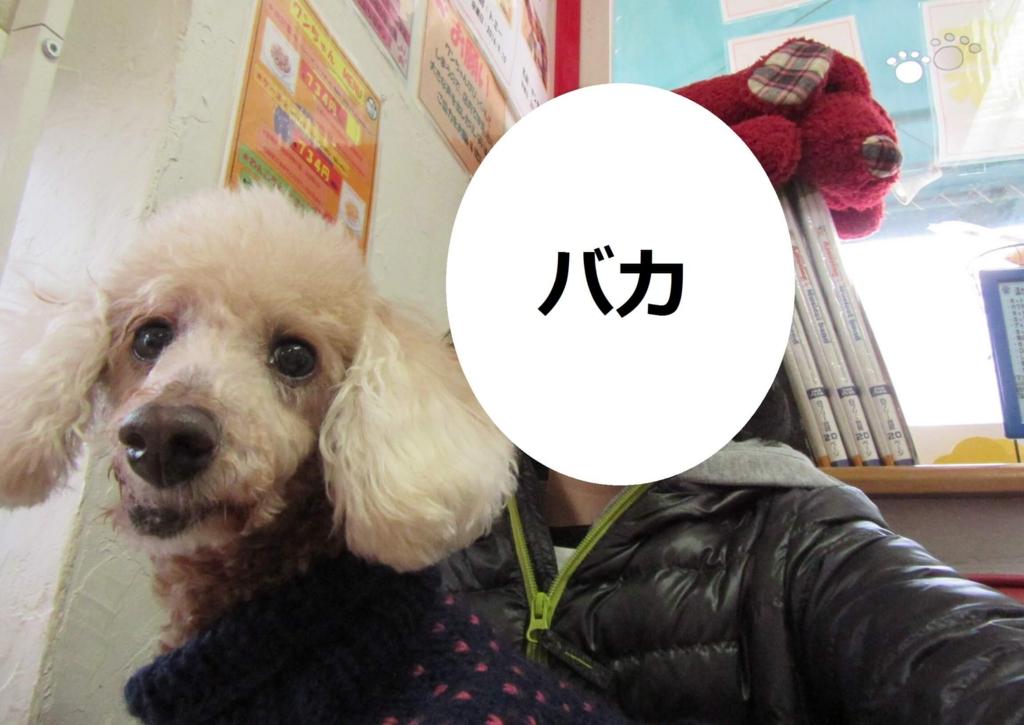 f:id:Sakurachannel0530:20170303175712j:plain