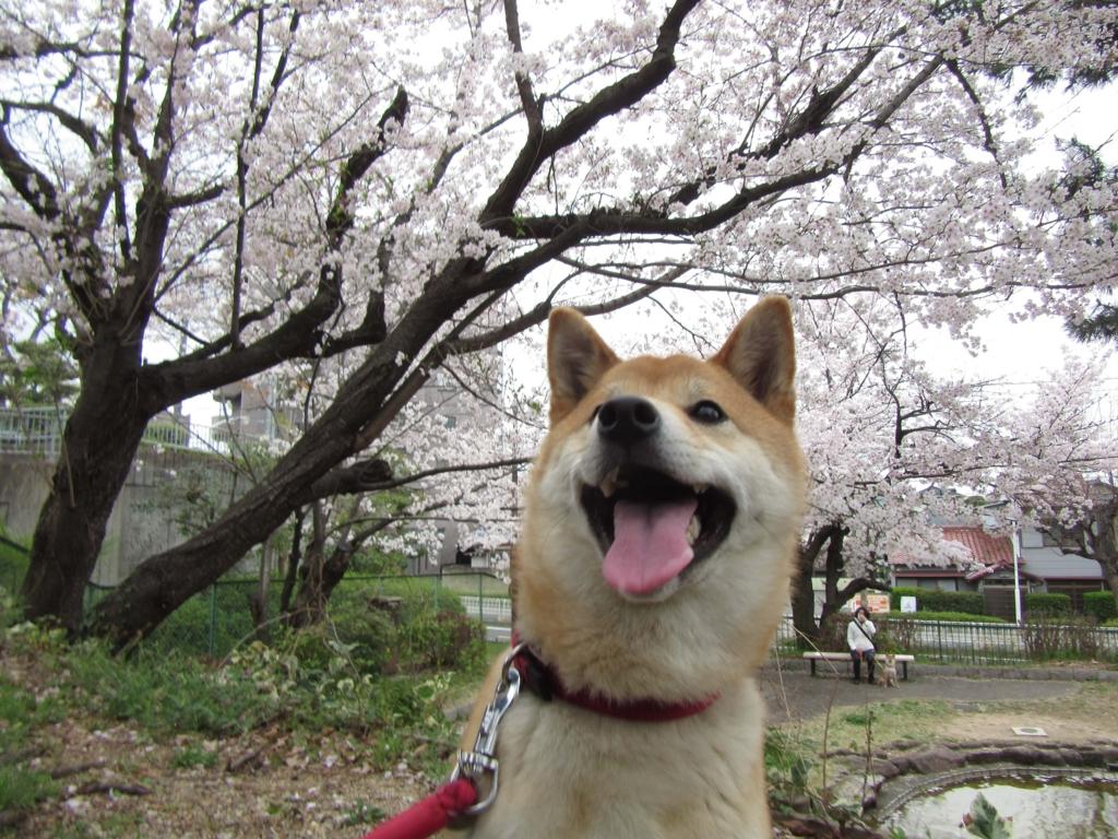 f:id:Sakurachannel0530:20170405200344j:plain
