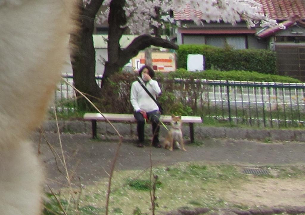 f:id:Sakurachannel0530:20170405202656j:plain