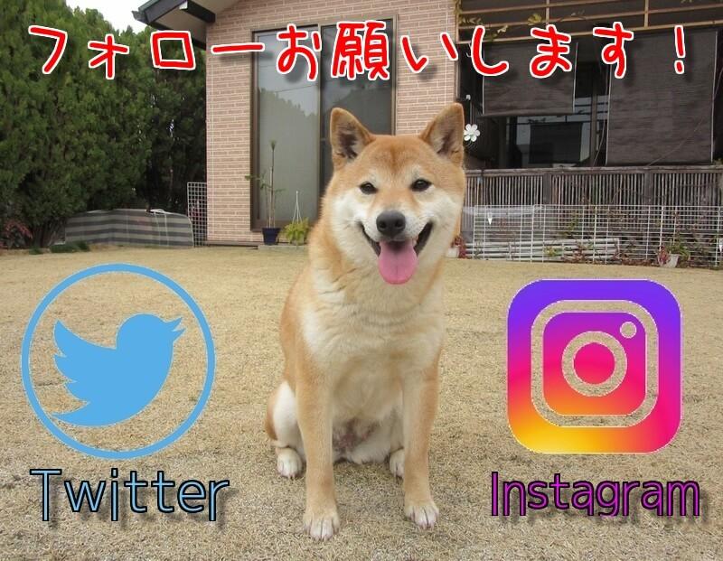 f:id:Sakurachannel0530:20170412185635j:plain