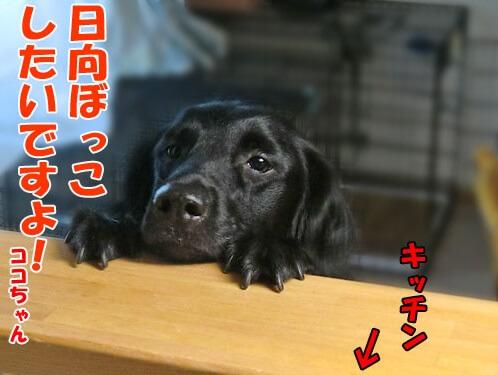 f:id:Sakurachannel0530:20170831141756j:plain