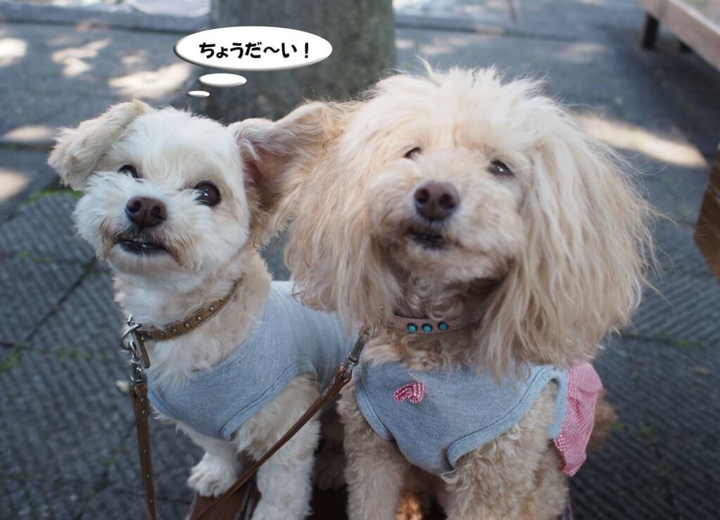 f:id:Sakurachannel0530:20170831141921j:plain