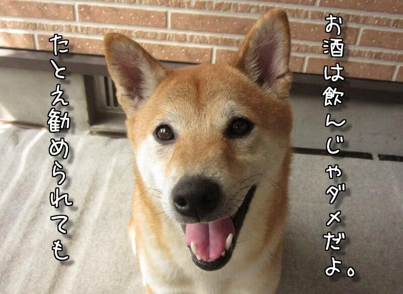f:id:Sakurachannel0530:20170907171936j:plain