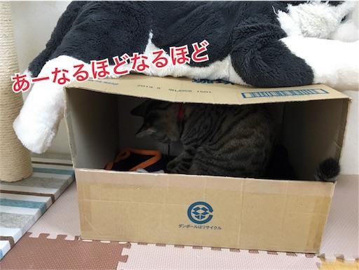 愛猫に段ボールハウスを披露