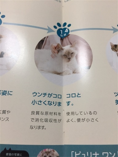f:id:Sakuranbox:20181025201456j:image