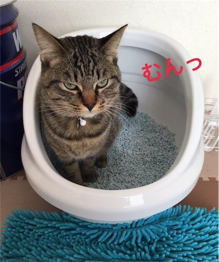 踏ん張っている愛猫