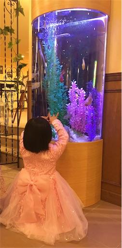 綺麗な水槽にいる熱帯魚にはしゃぐ娘