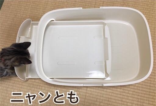 f:id:Sakuranbox:20190317150011j:image
