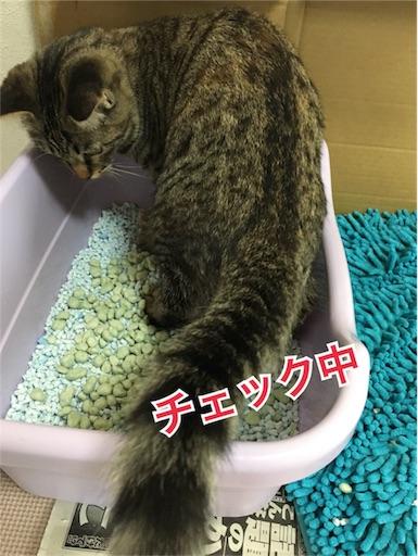 f:id:Sakuranbox:20190317150152j:image