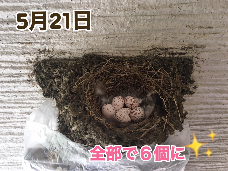 f:id:Sakuranbox:20200531142714j:plain