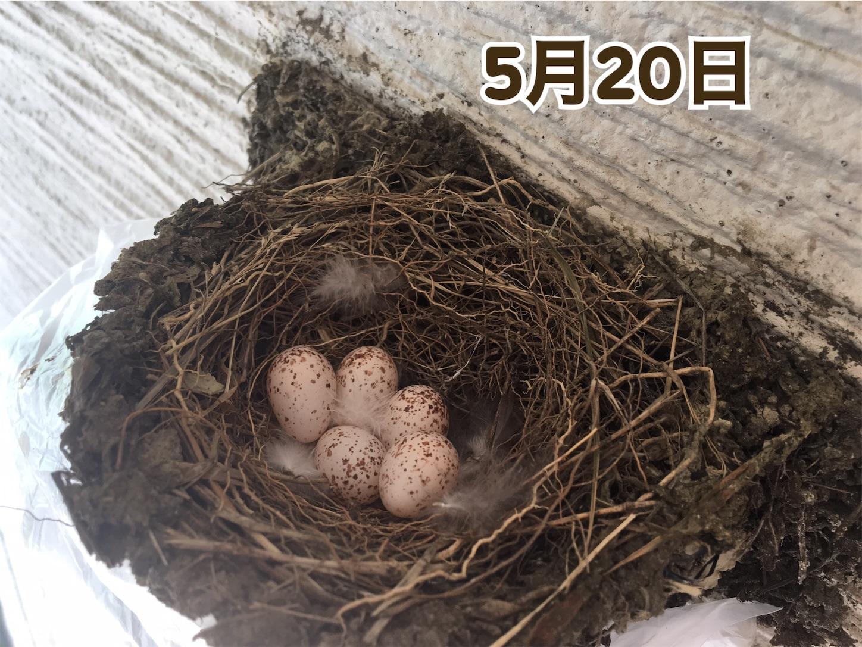 f:id:Sakuranbox:20200531142725j:plain