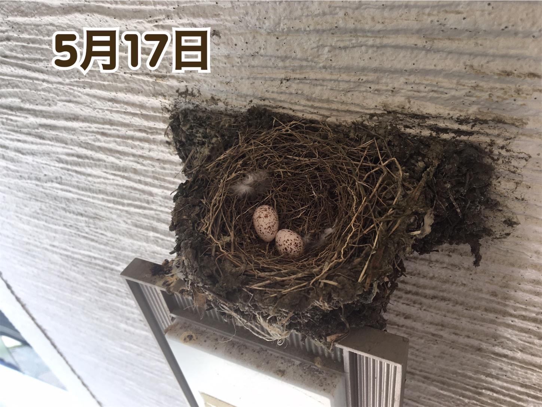 f:id:Sakuranbox:20200531142732j:plain