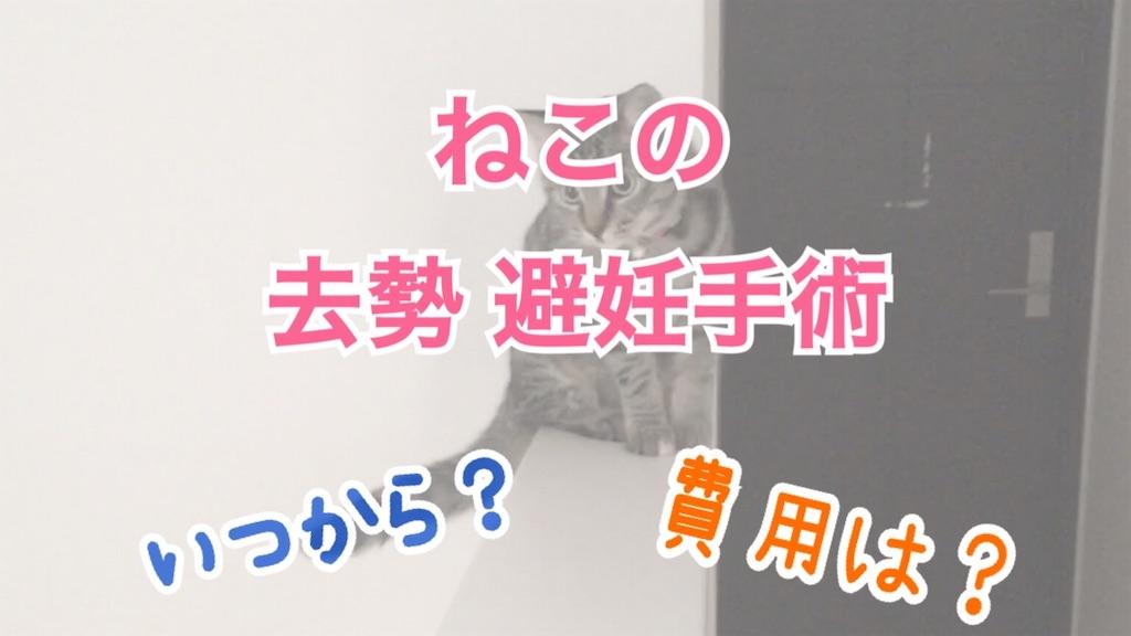 f:id:Sakuranbox:20210418151845j:plain