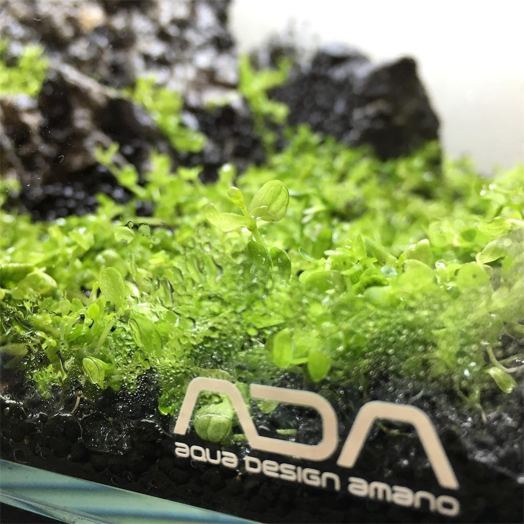 f:id:Sana_plant:20170521183246j:image