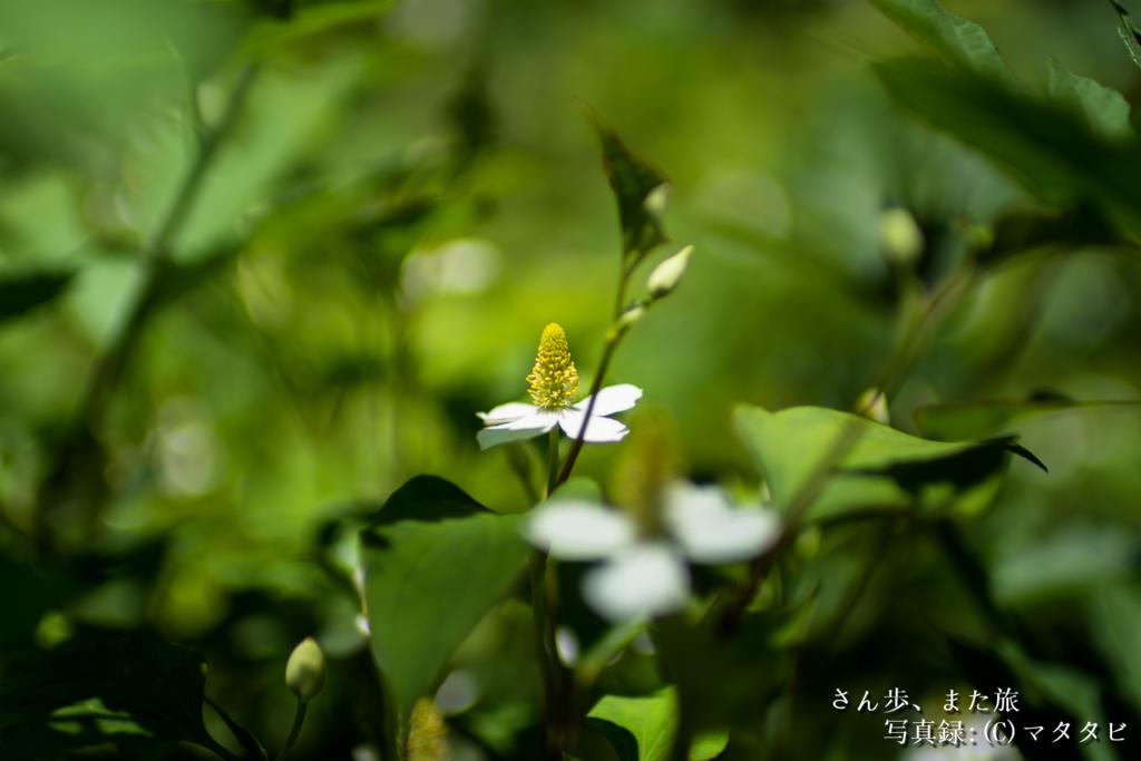 f:id:Sanpomatatab:20160627212014j:plain