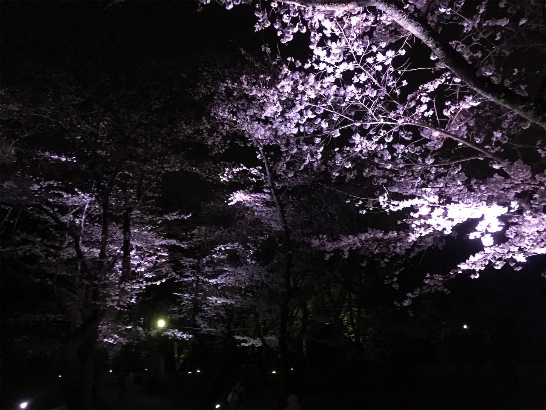 f:id:Sasuraiinko:20190401211026j:image